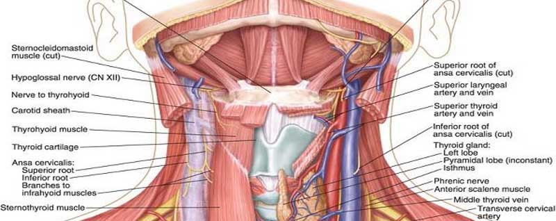 Neck Dissection Classification and Head and Neck Cancer Treatment ...